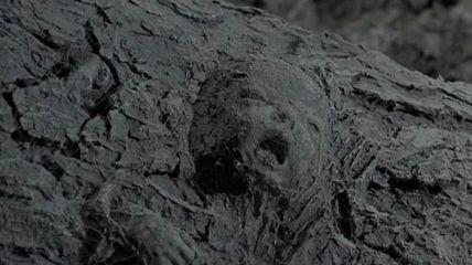 L'albero del male_4